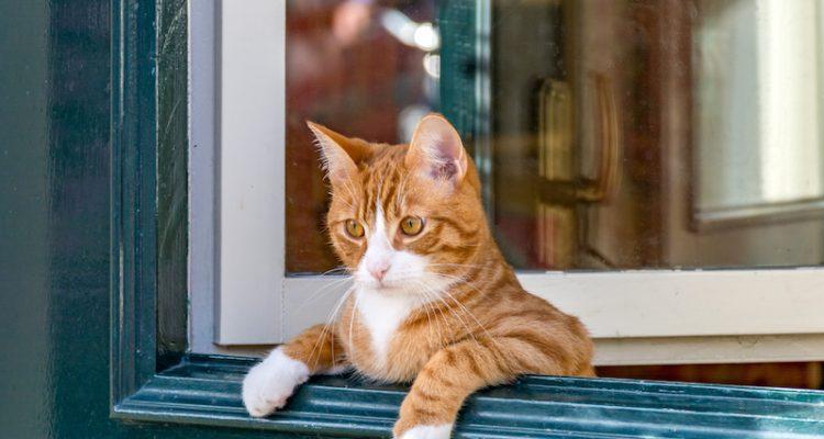 ドアから覗く猫